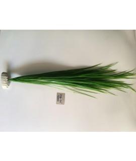 """Plant 016-22"""""""