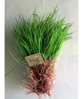Plant 3125