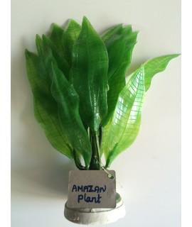 Amazon Plant